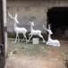 名圖玻璃鋼雕塑玻璃鋼動物造型,佛山玻璃鋼動物雕塑色澤光潤