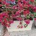 玻璃鋼花箱圖片,公園花盆,榮興報價