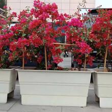 玻璃鋼花箱廠家,公園花盆定制價格,河北圖片