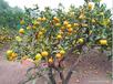 衡陽果園果樹資產評估拆遷補償標準,采摘園果樹資產評估