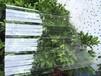 屋頂隔熱貨廣州好用的塑料瓦廠