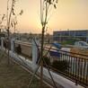 中山小区锌钢护栏