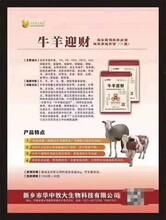 牛羊迎財破壞疫苗嗎圖片