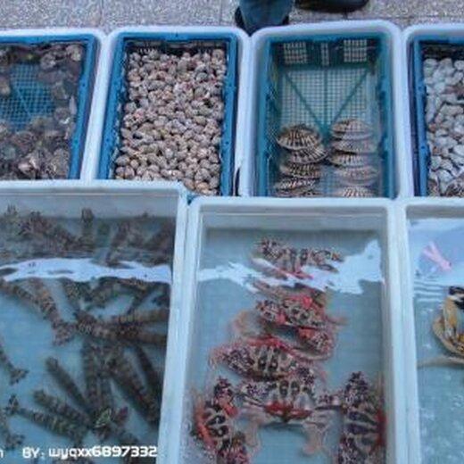 宁波进口冷冻巴沙鱼清关需要的资料