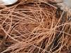 珠海金灣區梟凱報廢電線電纜回收上門服務,紫銅回收