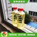 重慶植物油燃料賣明火點不燃燃料技術配方講解