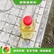 石家莊新樂無醇燃料新型液化氣如何調配,無醇燃料植物油燃料