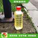 石家莊新樂節能燃料植物油水燃料成本是多少錢,明火點不燃燃料