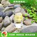天津無污染新源素植物油操作簡單,植物油燃料明火點不燃