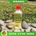 南昌進賢山東植物油新型液化氣哪里有批發,生物燃料廚房明用油