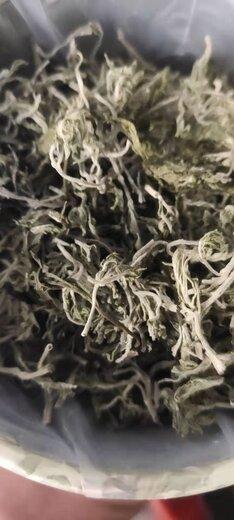 河北保定安新生产文冠果茶价格实惠