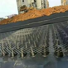 精致排水板品质优良图片