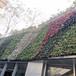 鄭州植物墻容器規格綠植景觀