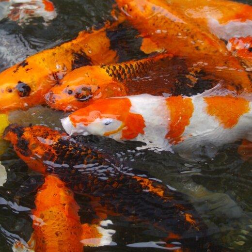 北京鱼苗养殖利润高