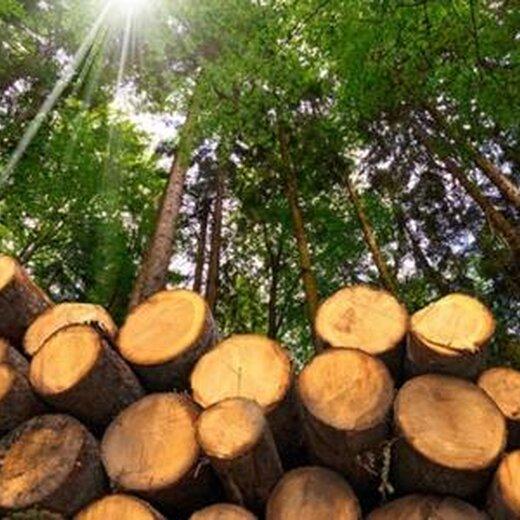 大連進口木材清關需要多久
