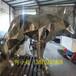 自動港粵雕塑玻璃鋼電鍍款式齊全,玻璃鋼動物雕塑