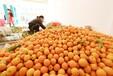 惠州辦理農產品品牌建設推廣