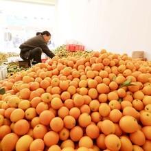 永州地理標志商標農產品區域公共品牌服務認證服務,農產品區域公共品牌建設