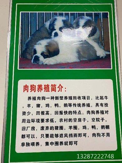 吉安雜交肉狗批發廠家,肉狗養殖