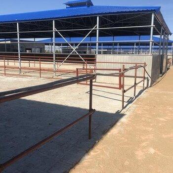 烏魯木齊400斤西門塔爾牛犢子價格廠家供應