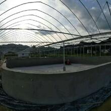 海容泡沫八角池,衡水泡沫魚池廠家圖片