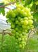 撫州果園果樹資產評估拆遷補償標準,采摘園果樹資產評估