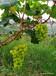 清遠果園果樹資產評估標準