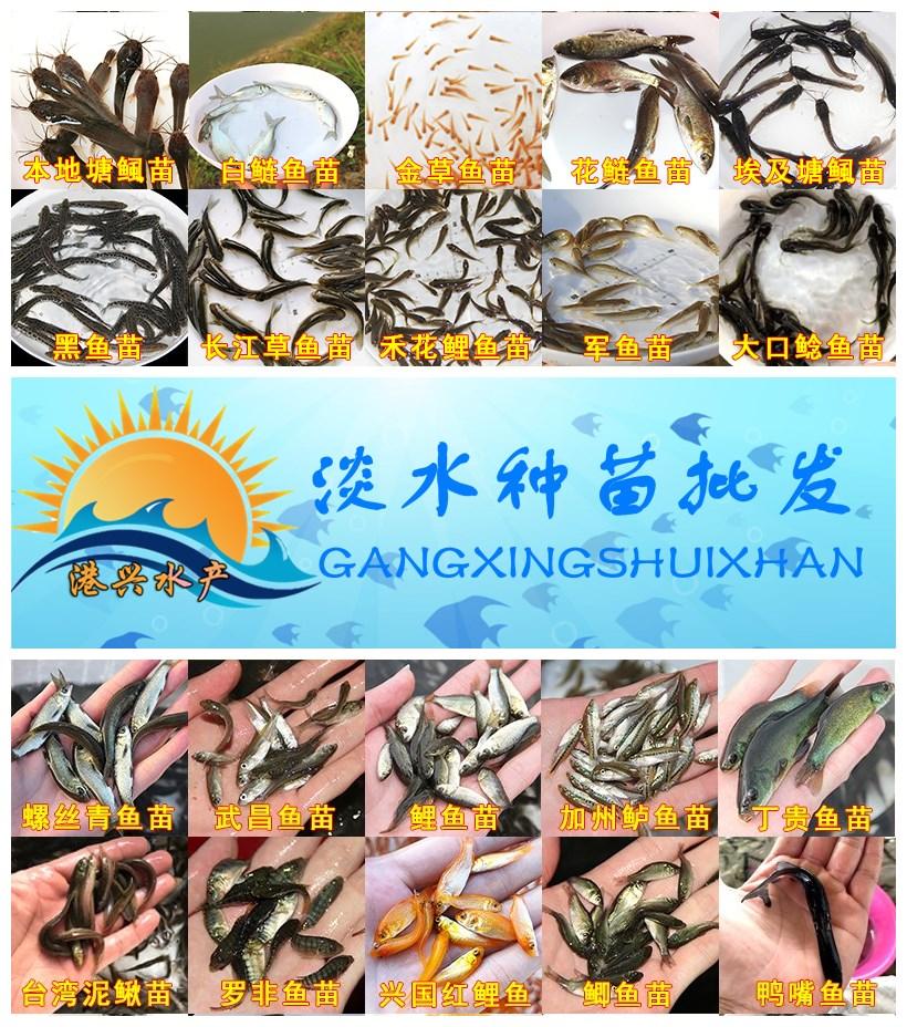 魚苗種圖_副本.jpg