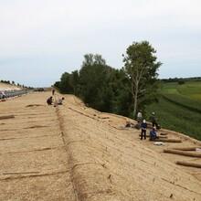 沙漠化生態修復草籽椰絲毯,綠化椰絲毯水土流失修復圖片