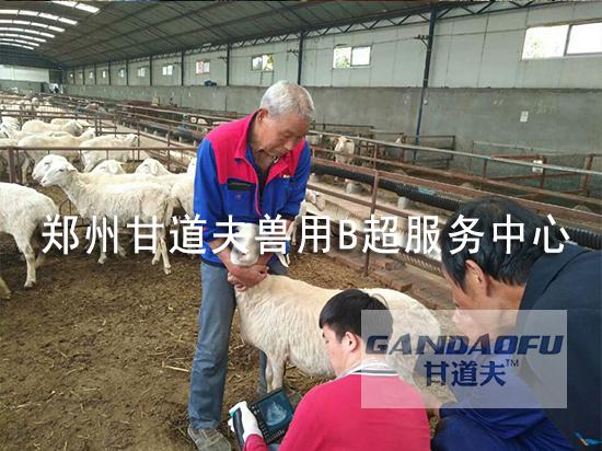 K7测羊.jpg