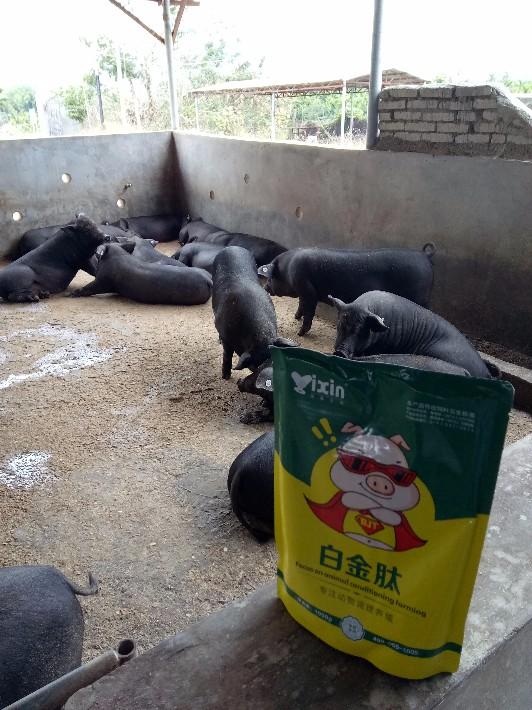 猪白金肽6 - 副本.jpg