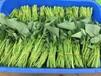 西瓜紅紅薯苗脫毒紅薯苗助力高產