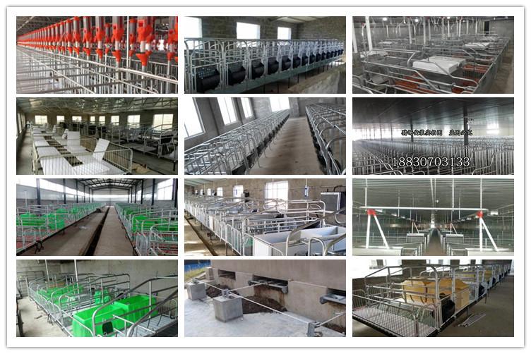 猪场建设设计方案实施养猪设备预算母猪定位栏价格限位栏产床