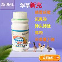 小鸡气囊炎的治疗_鸡气囊治疗的药图片