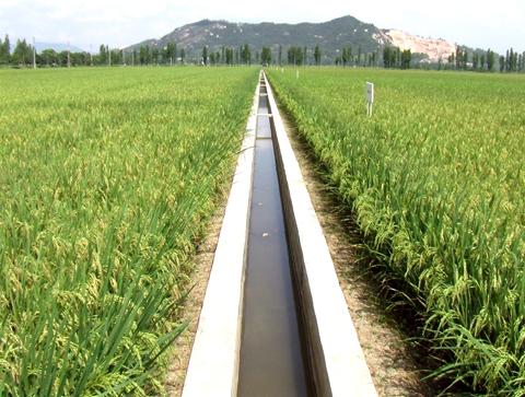 灌溉.jpg