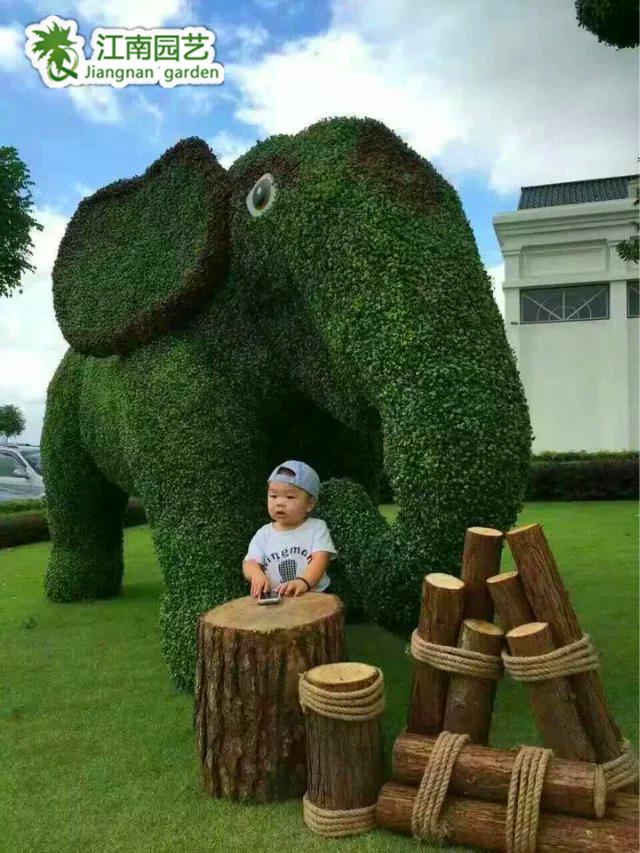 大象5.jpg