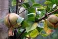 易丹醫坊這六種養發護發植物,你用過嗎?