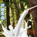 供应福建福州天然乳胶天然橡胶增胶剂水性喷胶手套乳胶质量保障