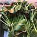 天津從事蔬菜漂燙殺青設備服務周到,漂燙機