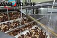 天津從事蔬菜漂燙殺青設備質量可靠,漂燙機