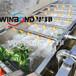 瓜果蔬菜清洗機,蔬菜清洗機,蔬菜清洗設備,果蔬清洗機