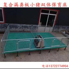 供应江苏小猪保育床仔猪断奶栏小猪双体保育栏尺寸厂家订做图片