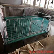 复合板小猪保育床养猪设备小猪育肥床腾焰厂家订做图片