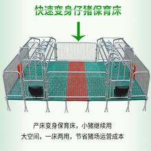 供應母豬產床養豬設備母豬產保一體床尺寸是多少圖片
