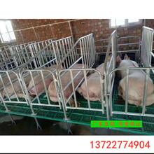 四川豬欄母豬保胎欄廠家訂做尺寸一組十豬位帶食槽圖片
