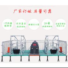 全復合母豬產床母豬分娩床單體母豬產床廠家尺寸訂做圖片