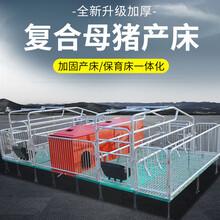 供应萍乡母猪分娩床母猪产仔栏养猪设备落地产床图片