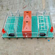 猪用复合保育床小猪保育床母猪产床定位栏养猪设备畜牧机械图片