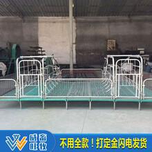 母猪复合双体产床产保两用产床保育床分娩床限位栏定位栏养猪设备图片