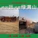 安徽滁州護坡種草機噴播漿種草機植被建植種草噴播機廠家